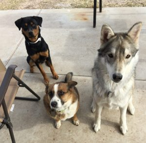 3-dogs-resized